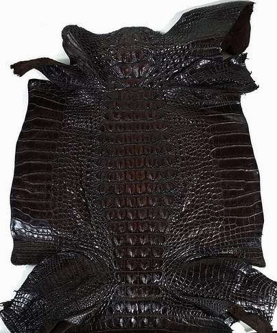 Used Clothing Wholesale >> Alligator Leather - Wholesale Alligator Skins for ...