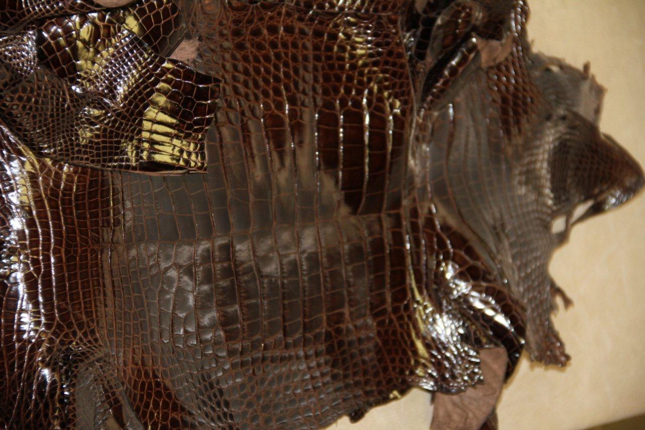 Alligator Leather Wholesale Alligator Skins For